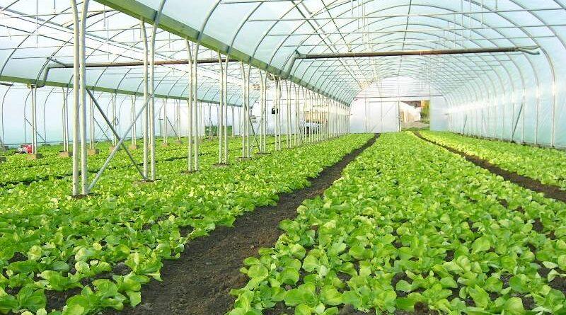Kasvuhoonete paigaldus ja hooldus