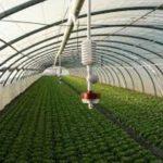 Netafim sprinklerid2-hortinet